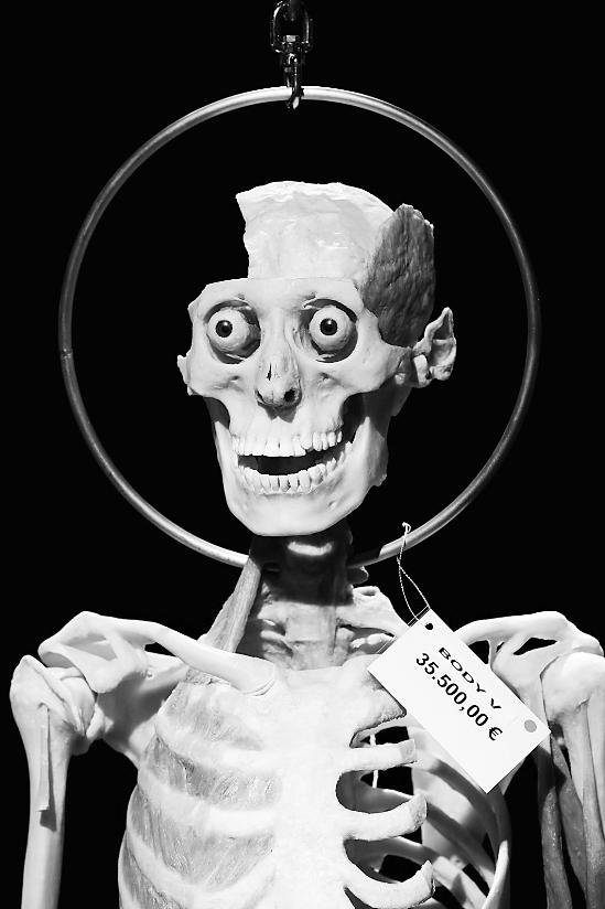 哈根斯博士向专业人士出售的人体塑化标本.图片