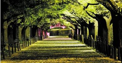 罗兰香谷林荫大道图片