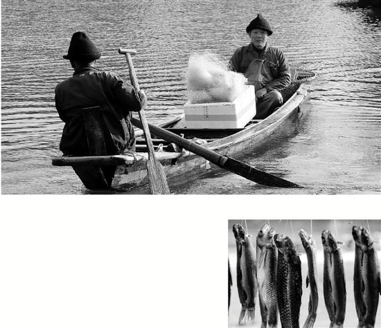 西湖水变清,今年鱼儿苗条口感好