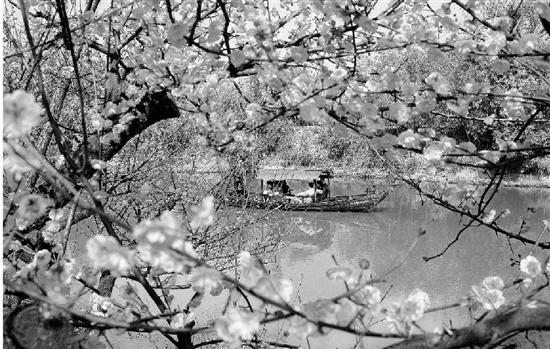 西溪湿地邀您曲水寻梅过春节