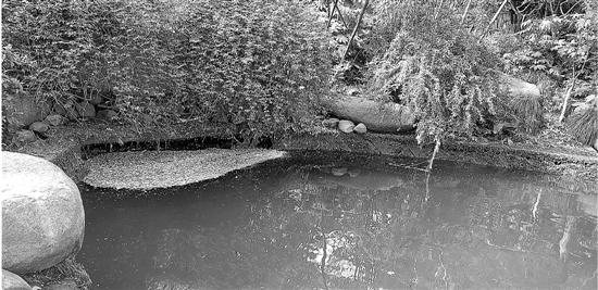 出事水塘里还有人在游泳 杭城类似闸门能否加强管理