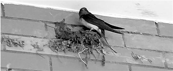 """创""""四星""""的高速服务区 筑巢的燕子会影响评级吗"""